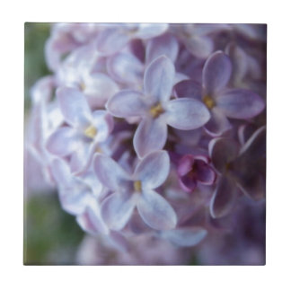 Purple Flowers Tile