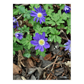 Purple flowers with yellow eyes postcard