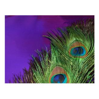 Purple Foil Peacock Postcard