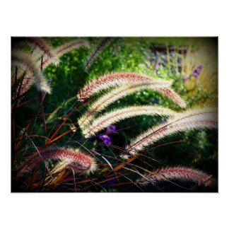 Purple Fountain Grass Poster