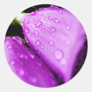 Purple foxglove w/ raindrops classic round sticker