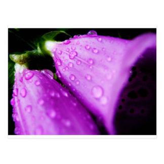 Purple foxglove w/ raindrops postcard