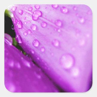 Purple foxglove w/ raindrops square sticker