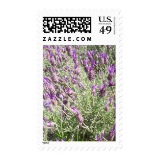 Purple French Lavender Flowers Postage
