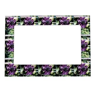 Purple fugue magnetic frames PFUGUE
