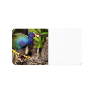 purple gallinule address label