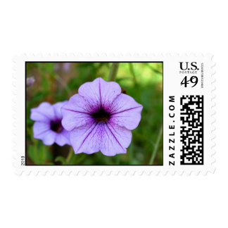 Purple Garden Petunia Postage