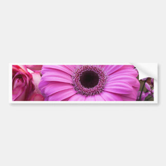 Purple Gebera Flower Bumper Stickers