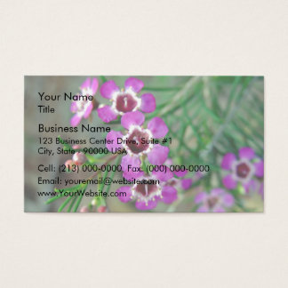 Purple Geraldton Wax flowers and buds Business Card