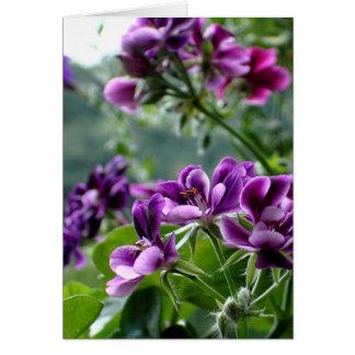 Purple Geranium Card