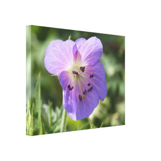 Purple Geranium Flower on Canvas