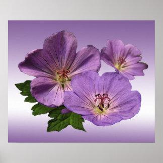 Purple Geranium Flowers Posters