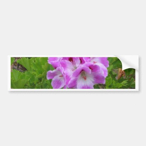 Purple Geraniums Bumper Sticker