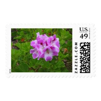 Purple Geraniums Stamps