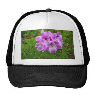 Purple Geraniums Trucker Hat
