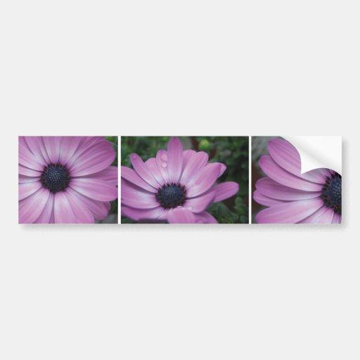 Purple Gerbera Daisy Flower Bumper Sticker Car Bumper Sticker