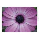 Purple Gerbera Daisy Flower Greeting Card