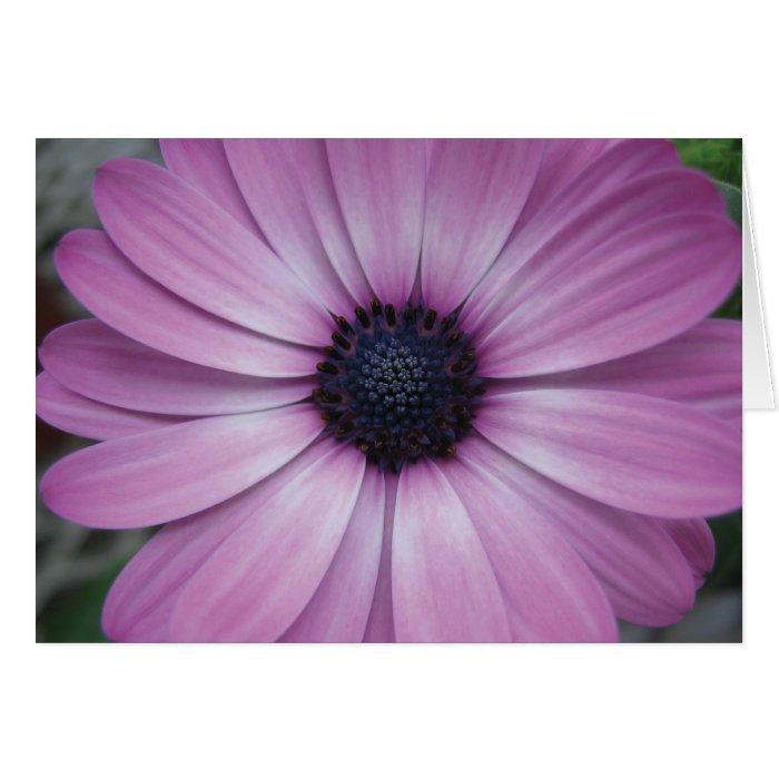 purple gerbera daisy flower greeting card zazzle