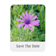 Purple Gerbera Floral Save The Date Magnet at Zazzle