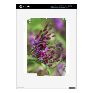 Purple Giant Ironweed Wildflower Buds iPad 3 Decals