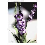 purple gladiola_fresco greeting cards