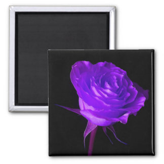 """Purple Glow"" Rose 2 Inch Square Magnet"