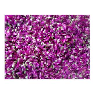 Purple Gomphrena Postcards