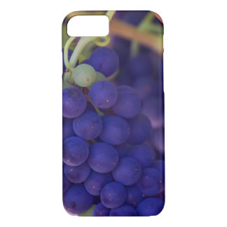 Purple Grape Bunches On The Vine iPhone 8/7 Case