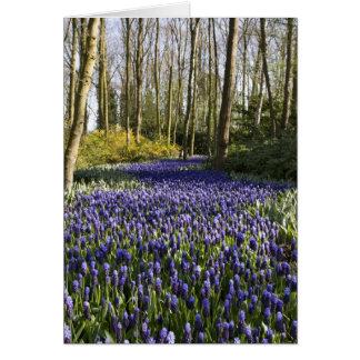 Purple grape hyacinth field greeting card