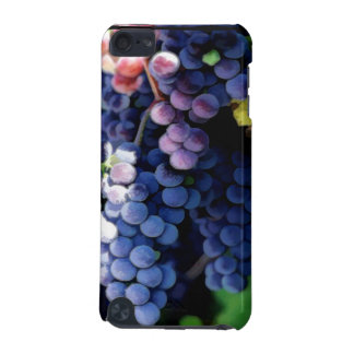 Purple Grapes Cluster iPod Touch 5G Case