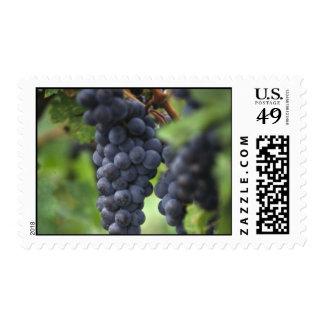 Purple Grapes Postage Stamp