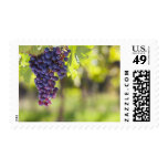 Purple grapevine postage stamps