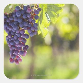 Purple grapevine square sticker