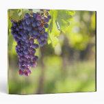 Purple grapevine vinyl binder
