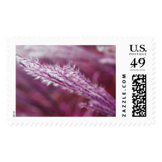 Purple Grass Postage Stamp