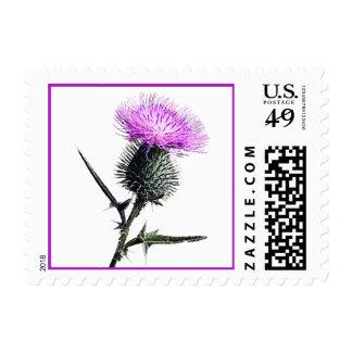 Purple, Green, White Thistle Postage Stamp