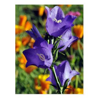 Purple Harebell Flower Postcard