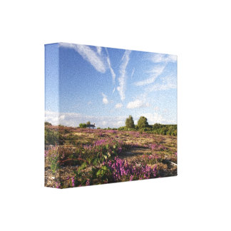Purple heather canvas print