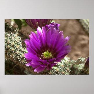 Purple Hedgehog Posters