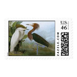 Purple Heron Postage