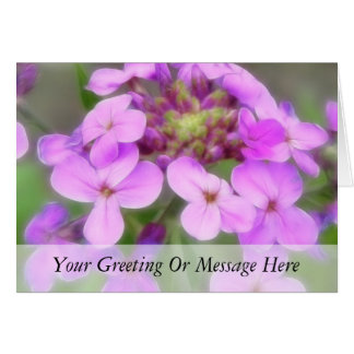 Purple Hesperis matronalis Flowers Card