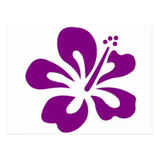 Purple hibiscus aloha flower C Postcard