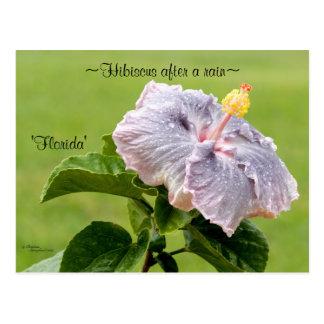 Purple Hibiscus flower Postcard