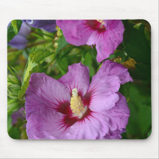 Purple hibiscus flowers mouse pad