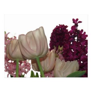 Purple Hyacinth And Pink Tulip Floral Postcard