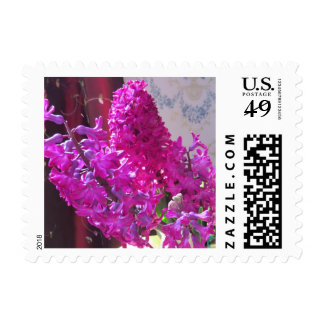 Purple Hyacinth Flowers Postage Stamp