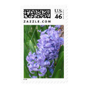 Purple Hyacinths: Flower Postage stamp