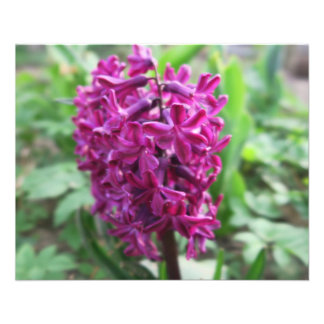 purple hyacinths spring flower flyer