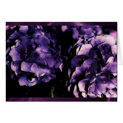 Purple Hydrangea floral, card templates Greeting Cards