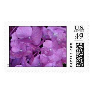 Purple Hydrangea Postage Stamp